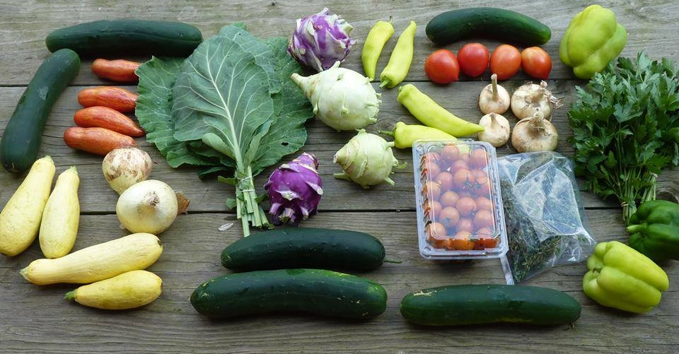 Summer CSA Share from Raleigh's Hillside Farm